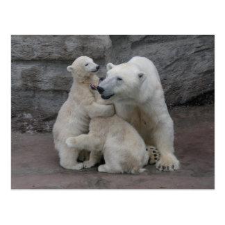 Polar Bear Cubs And Mother Postcard