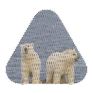 Polar bear cubs and their mother speaker