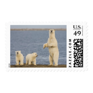 Polar bear cubs and their mother stamps