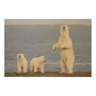 Polar bear cubs and their mother wood wall art