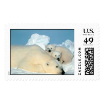 Polar Bear & Cubs by Steve Amstrup Postage