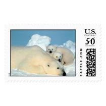 Polar Bear & Cubs by Steve Amstrup Postage