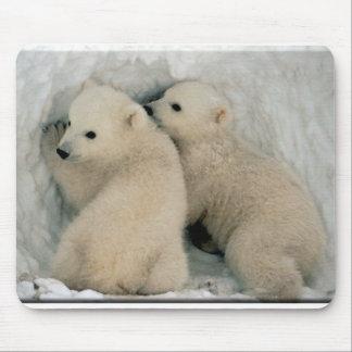 Polar Bear Cubs Mousepad