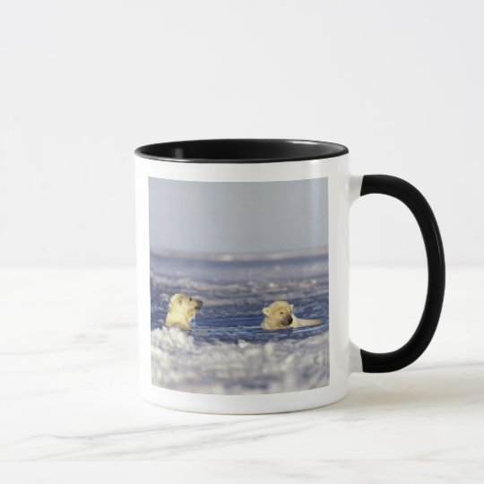Polar bear cubs playing in pack ice of the mug