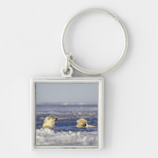 Polar bear cubs playing in pack ice of the Silver-Colored square keychain