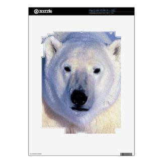 Polar Bear Decal For iPad 2