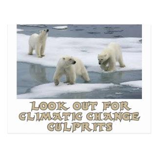 Polar bear designs postcard