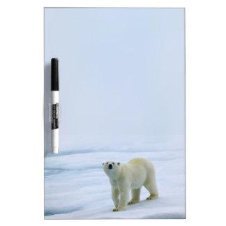 Polar Bear Dry-Erase Whiteboards