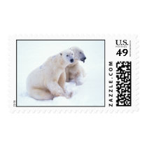 Polar Bear Duo Postage