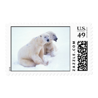 Polar Bear Duo Postage Postage Stamp