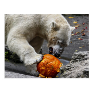 Polar Bear Eating a Pumpkin Postcard