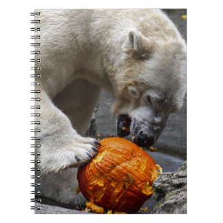 Polar Bear Eating a Pumpkin Spiral Note Book