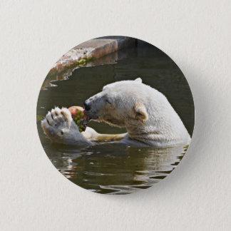 Polar Bear Eating Fruit In Water Pinback Button