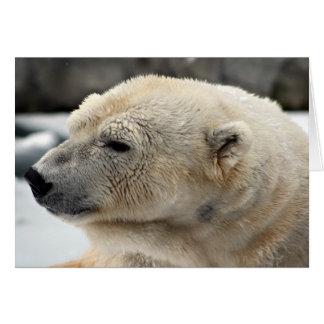 Polar Bear Elegance Card