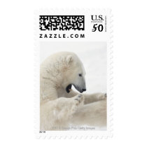 Polar bear engaging in a fight with another bear postage