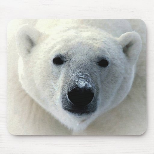 Polar Bear Face Mouse Pads