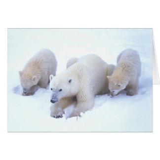 Polar Bear Family 2 Card
