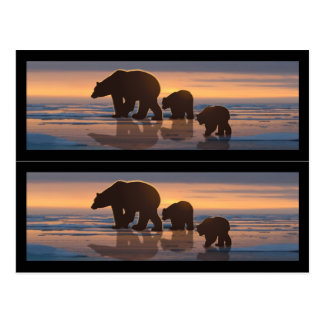 Polar Bear Family Book markers Postcard