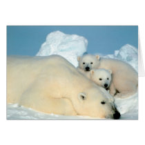 Polar Bear Family Card