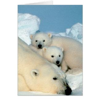 Polar Bear Family Card
