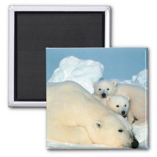 Polar Bear Family Fridge Magnet