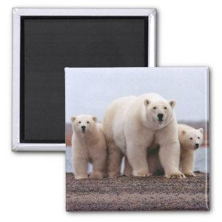 Polar Bear Family Magnet