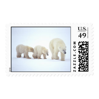 Polar Bear Family Postage