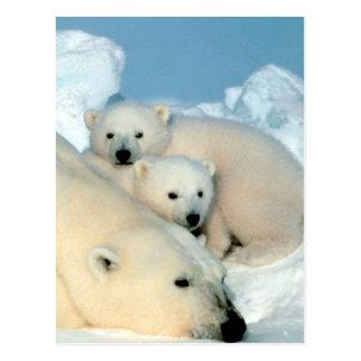 Polar Bear Family Postcard