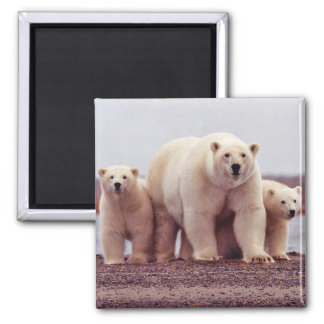 Polar Bear Female with Young Refrigerator Magnets