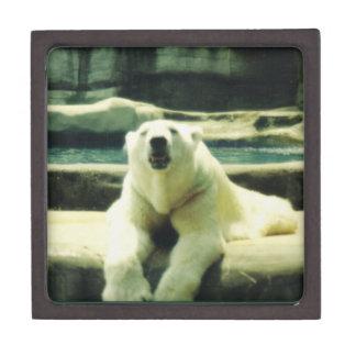 Polar Bear Gift Box