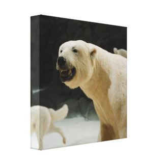 Polar Bear Grin Canvas Print
