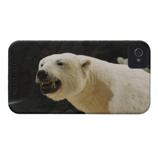 Polar Bear Grin iPhone 4 Cover