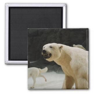 Polar Bear Grin Magnet
