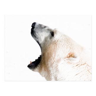 Polar bear growl postcard