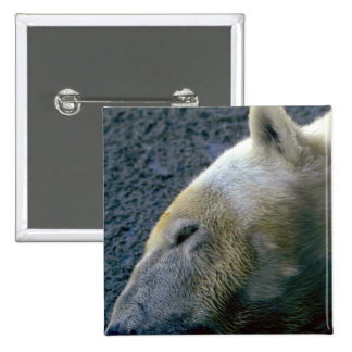 Polar Bear Head, Asleep Button