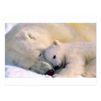 Polar Bear Hugs Postcard