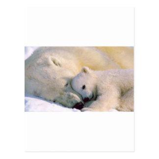 Polar Bear Hugs Postcards