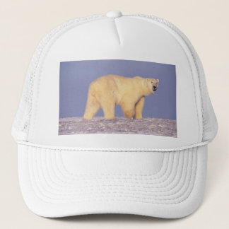 Polar Bear in Arctic Alaska Trucker Hat