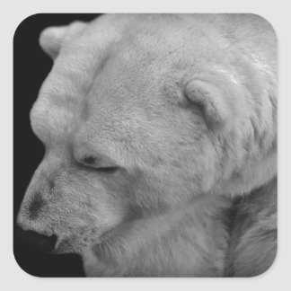 Polar Bear in Black and White Stickers