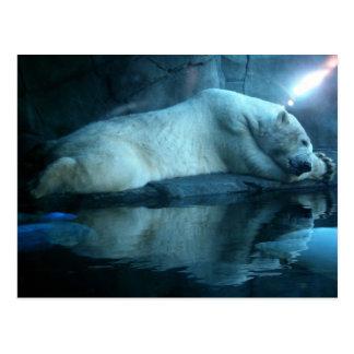 Polar Bear In Prayer 2 Postcard