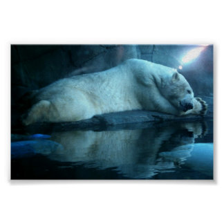 Polar Bear In Prayer 2 Poster
