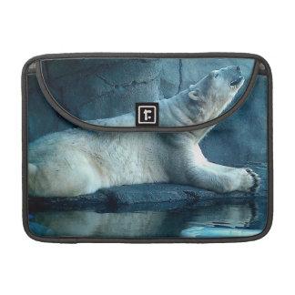 Polar Bear In Prayer Case