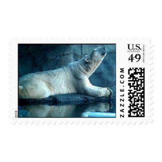 Polar Bear In Prayer Postage Stamps