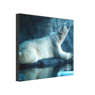 Polar Bear In Prayer Stretched Canvas