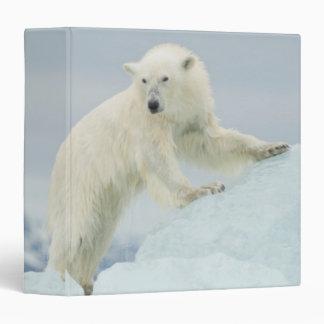Polar bear in summer 3 ring binder