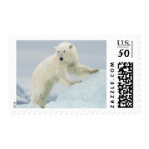Polar bear in summer postage