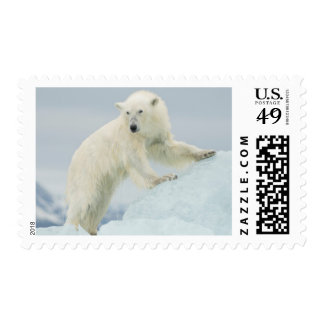 Polar bear in summer postage stamp