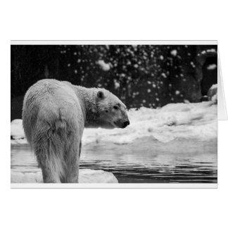 Polar Bear in the snow Card