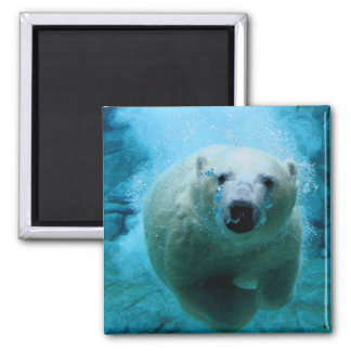 Polar Bear In Water 2 Inch Square Magnet