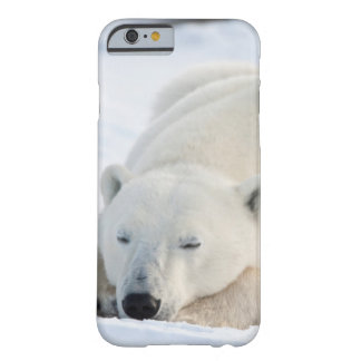 Polar Bear in winter Barely There iPhone 6 Case